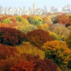 Central Park NYC: Central Park Fall Activities
