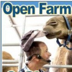 Open Farm & Show at Oasis Camel Dairy